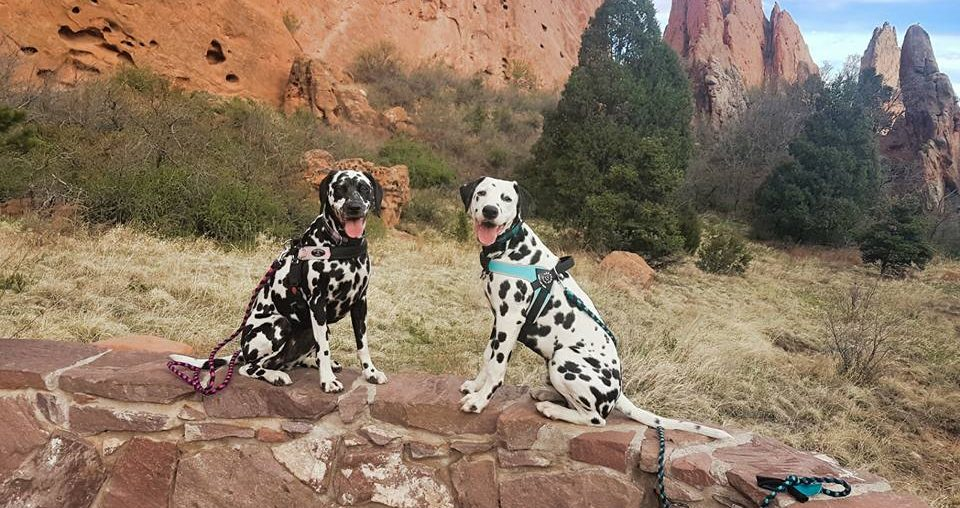 RandomsTravels have a lot of tips and tricks to help dog lovers enjoy Pet-Friendly travels, and they share their travel adventures with Roguetrippers.