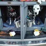 Random and Hazzard are comfortable in their crash rated safety kennel for road trips.