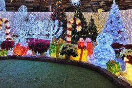Glow Gardens Christmas Lights