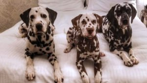 Roguetrippers love visiting really pet friendly hotels