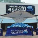 Giant Manta Ray at the Florida Aquarium