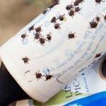 ticks found on a lint roller