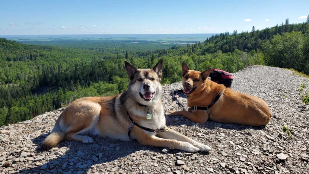Scribble and Bishop enjoy Hiking in Manitoba at Bald Hill, Riding Mountain National Park